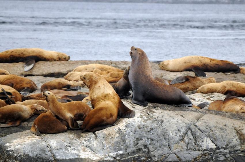 Cargar ítem 5 de 10. Half-Day Whale Watching (Vancouver, BC)