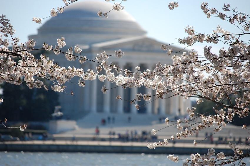 Washington D.C. Cherry Blossom 1-Day Tour from New York -CB1
