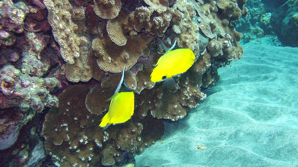 Show item 2 of 5. Close up of yellow fish underwater.