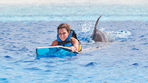 dolphin pushing a woman riding on a board