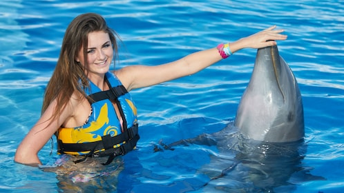 Woman touches dolphins nose at Dolphin Discovery Cayman
