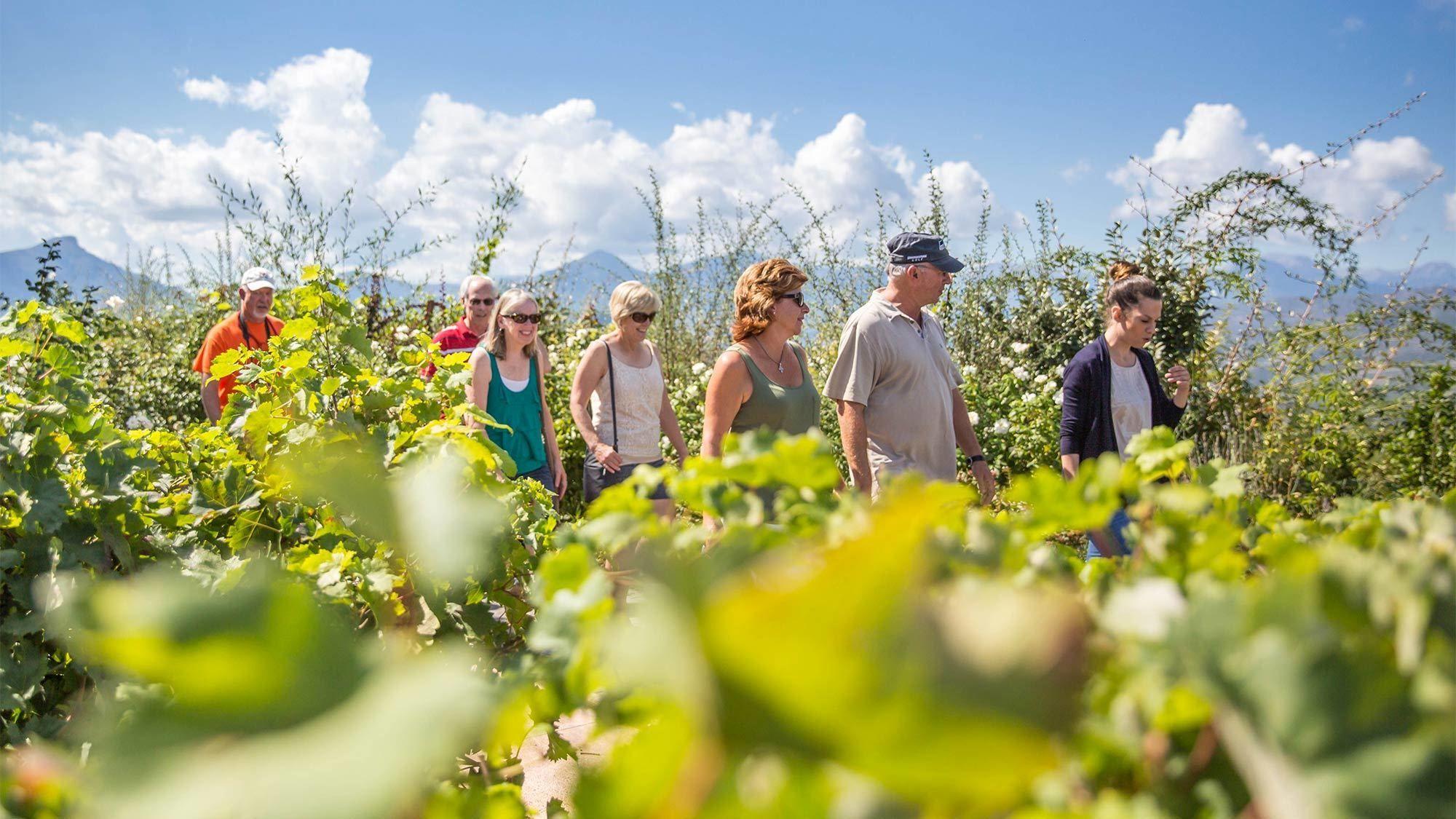Wine Tour of the Vineyards of Nemea