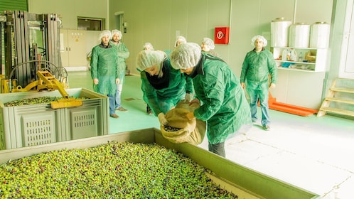 At the Olive Oil Tour in Peloponnese, Greece