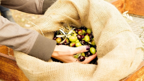 Woman looking at some freshly picked olives in Peloponnese, Greece