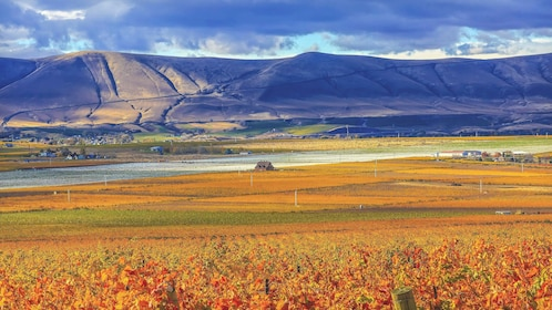 Scenic view of beautiful vineyard with mountains in the distance.