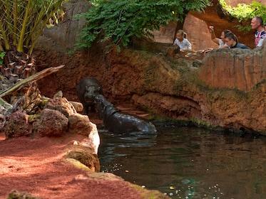 People look at Hippos in an enclosure at Bioparc Fuengirola