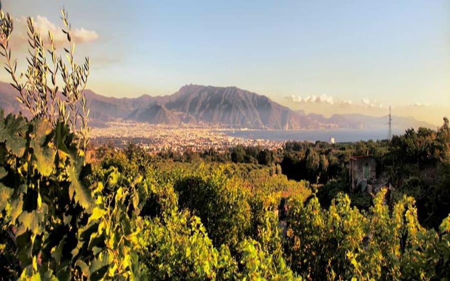 Åpne bilde 3 av 6. Lunch & Wine Tasting from Pompeii