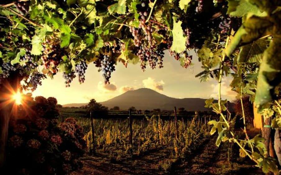 Åpne bilde 1 av 6. Lunch & Wine Tasting from Pompeii