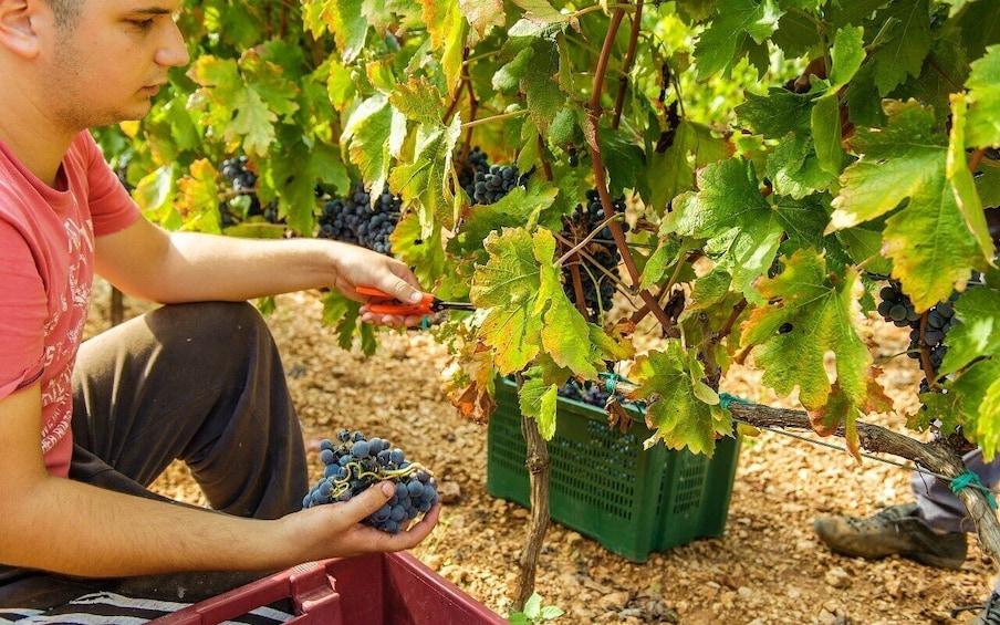 Foto 1 van 8.  Exclusive tour to Krka Waterfalls with Wine Tasting