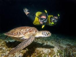 Small Group Moonlight Snorkeling Bio Tour - Bioluminiscence