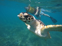 Swim with Turtles, Reef and Shipwreck Snorkelling Tour Cancun