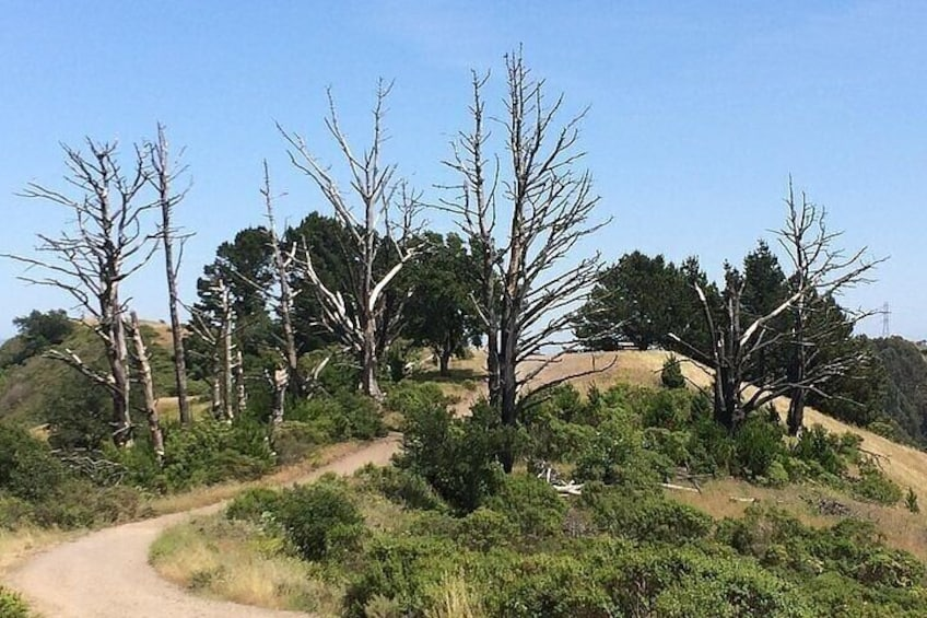 A Drive Through Time: A Ranching History of Point Reyes National Seashore