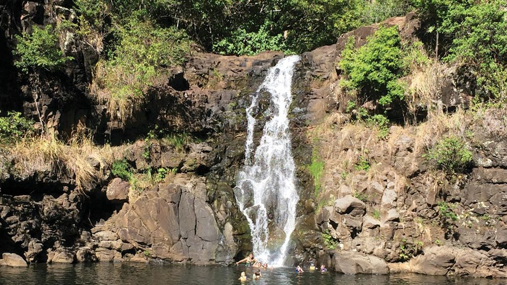 Full-Day Circle Island Tour: Nu'uanau Pali, North Shore & Waimea Valley