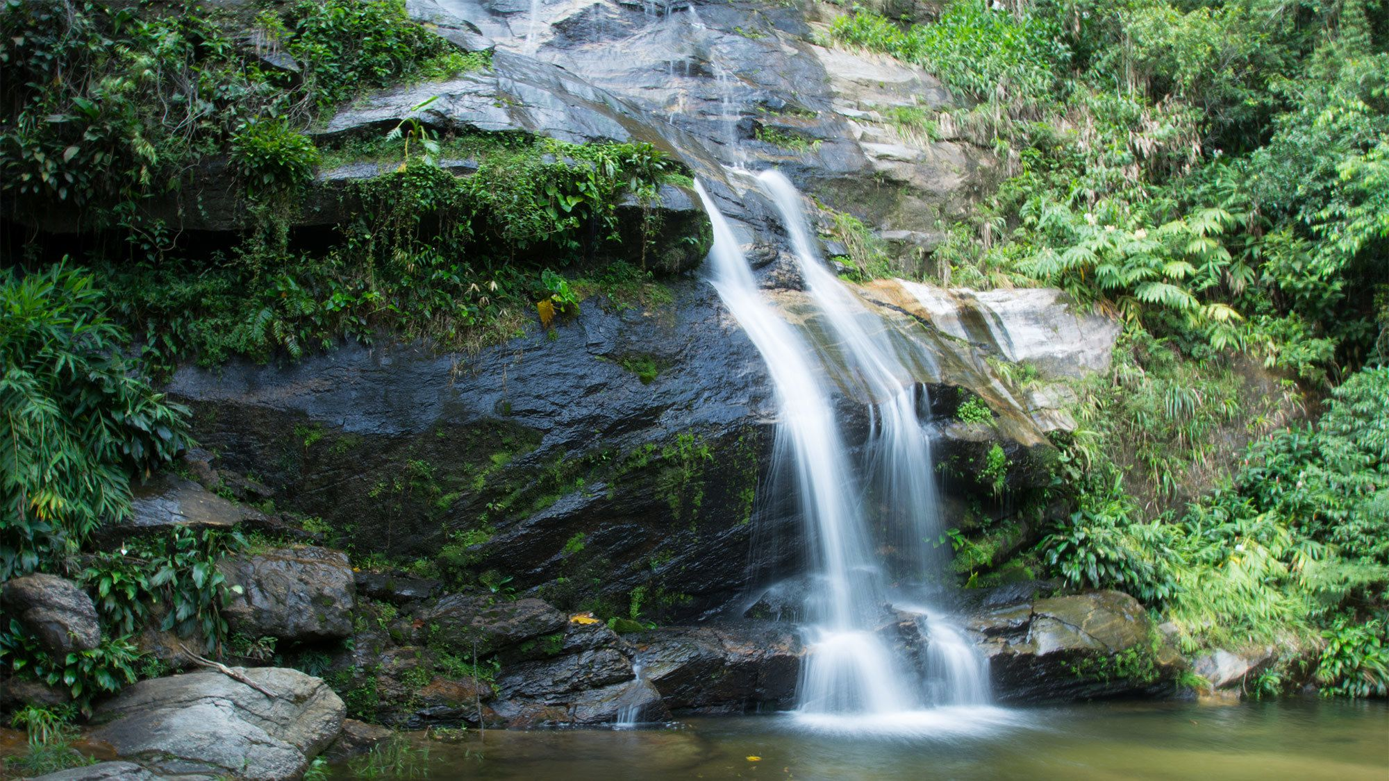 Tijuca National Park Tour with Photographer