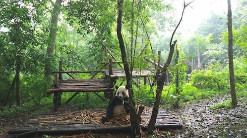 View of panda sitting near tree.
