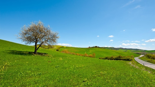 Beautiful green pastures in Florence