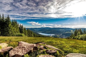 Black Forest, Lake Titisee & Rhine Falls Excursion
