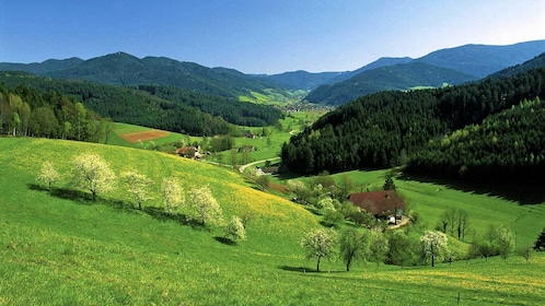 view of the green rolling hills in Switzerland