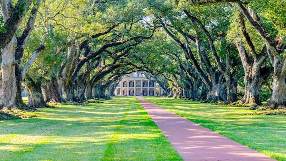Stunning view of the walkway and trees on the private plantation tour in New Orleans