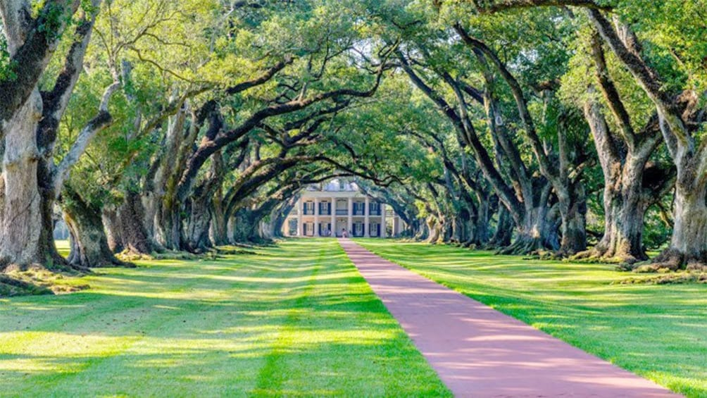 Show item 2 of 5. Stunning view of the walkway and trees on the private plantation tour in New Orleans