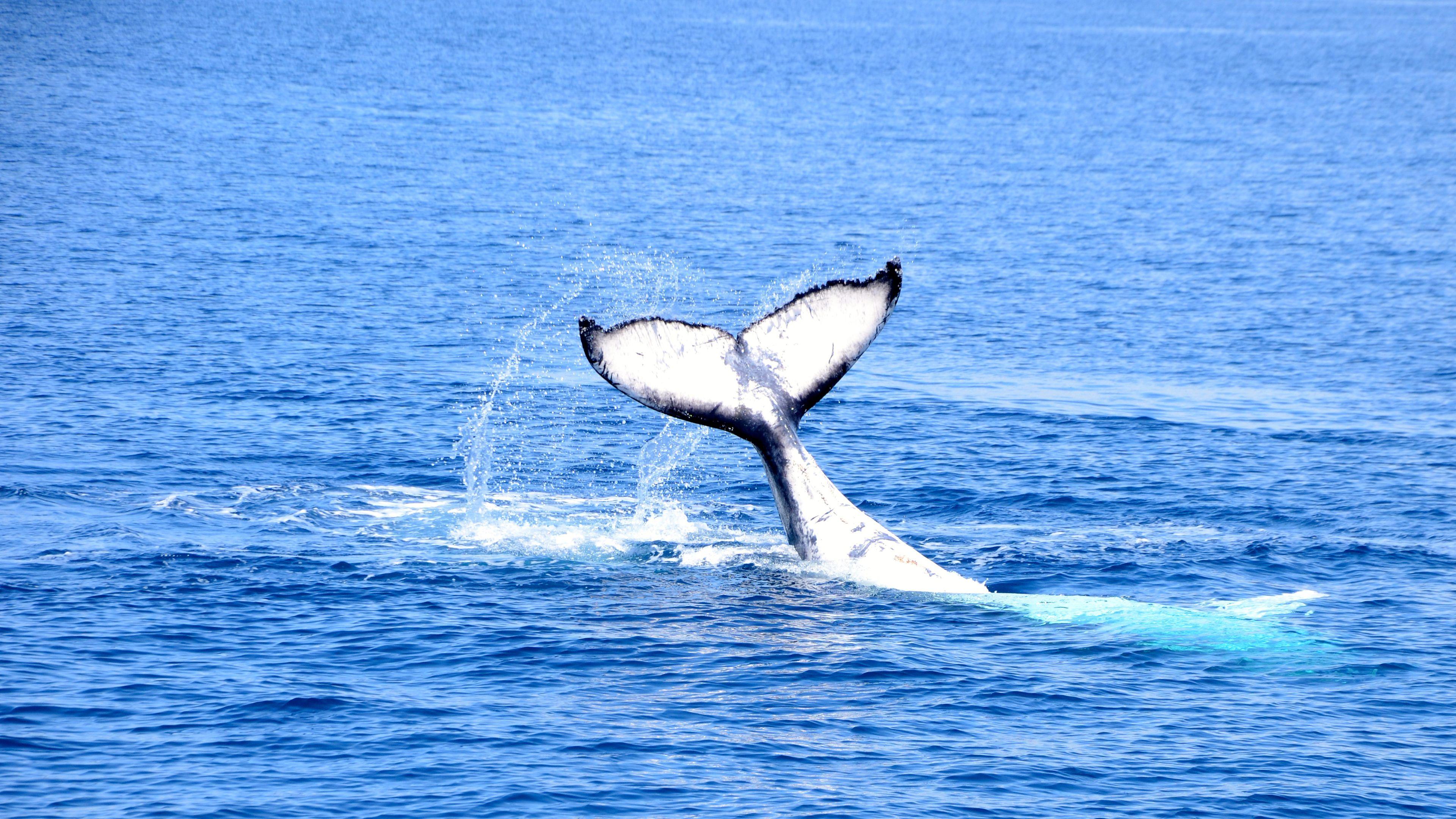 whale tail splashing