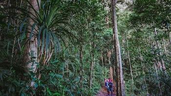 Evening Rainforest Wildlife Tour with Dinner