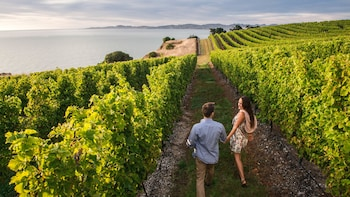 Half-Day Marlborough Wine Tour