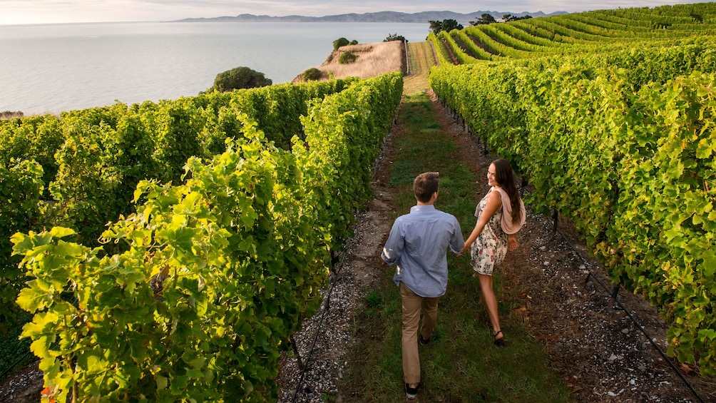 Show item 5 of 5. Couple walking through a vineyard near the coast in Marlborough