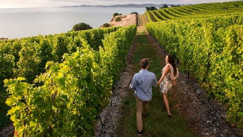 Couple walking through a vineyard near the coast in Marlborough