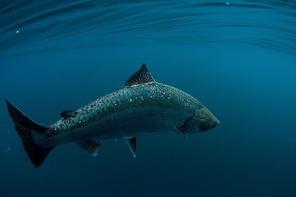Tofino Fishing and Wildlife Charter