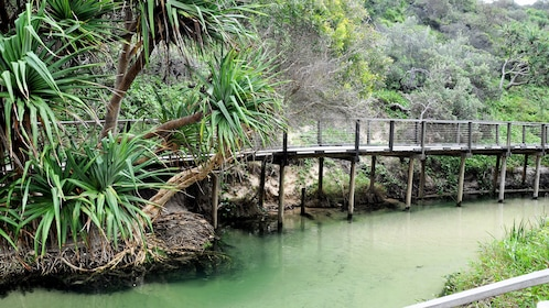 Elevated boardwalk along Eli Creek on Fraser Island