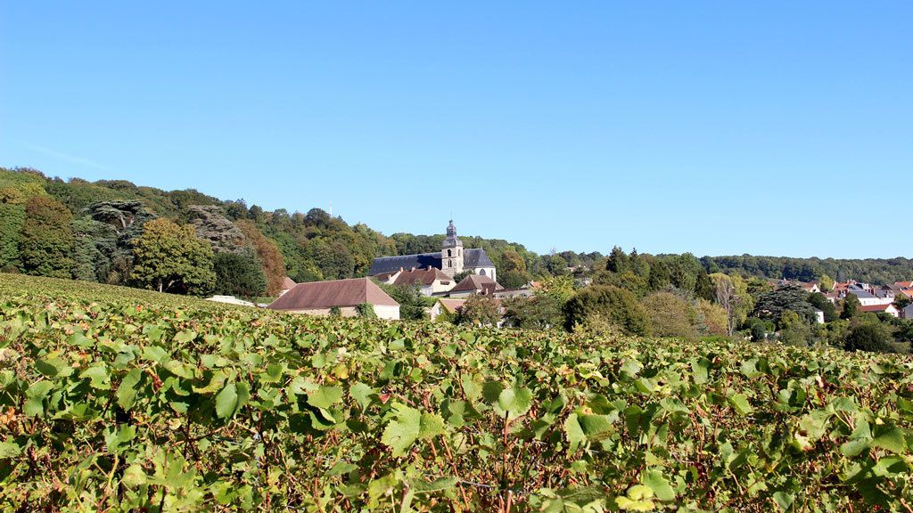 Vineyards with cathedral in Reims