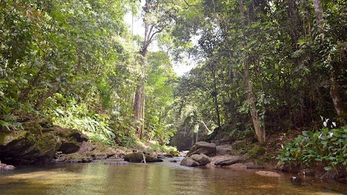 Scenic hike in Trinidad and Tobago
