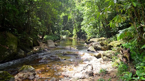 View down creek in forest in Trinidad
