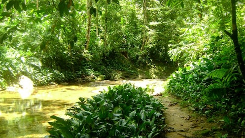 View of creek in forest of Trinidad