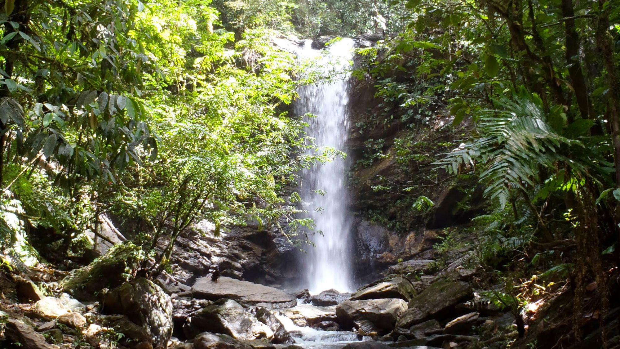 Rainforest Hike to Avocat Waterfall