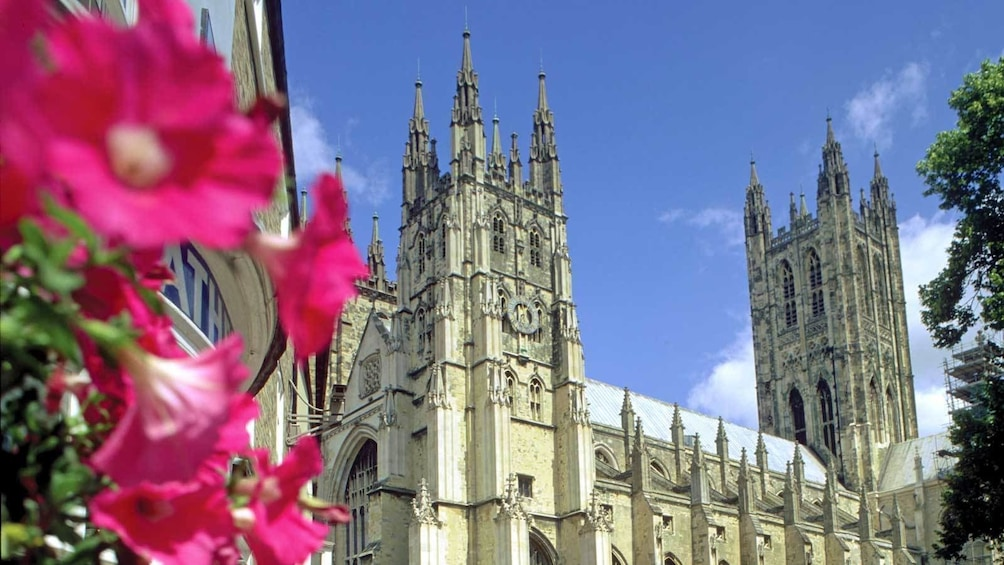 Foto 9 von 9 laden flowers blooming near the Canterbury Cathedral in the United Kingdom