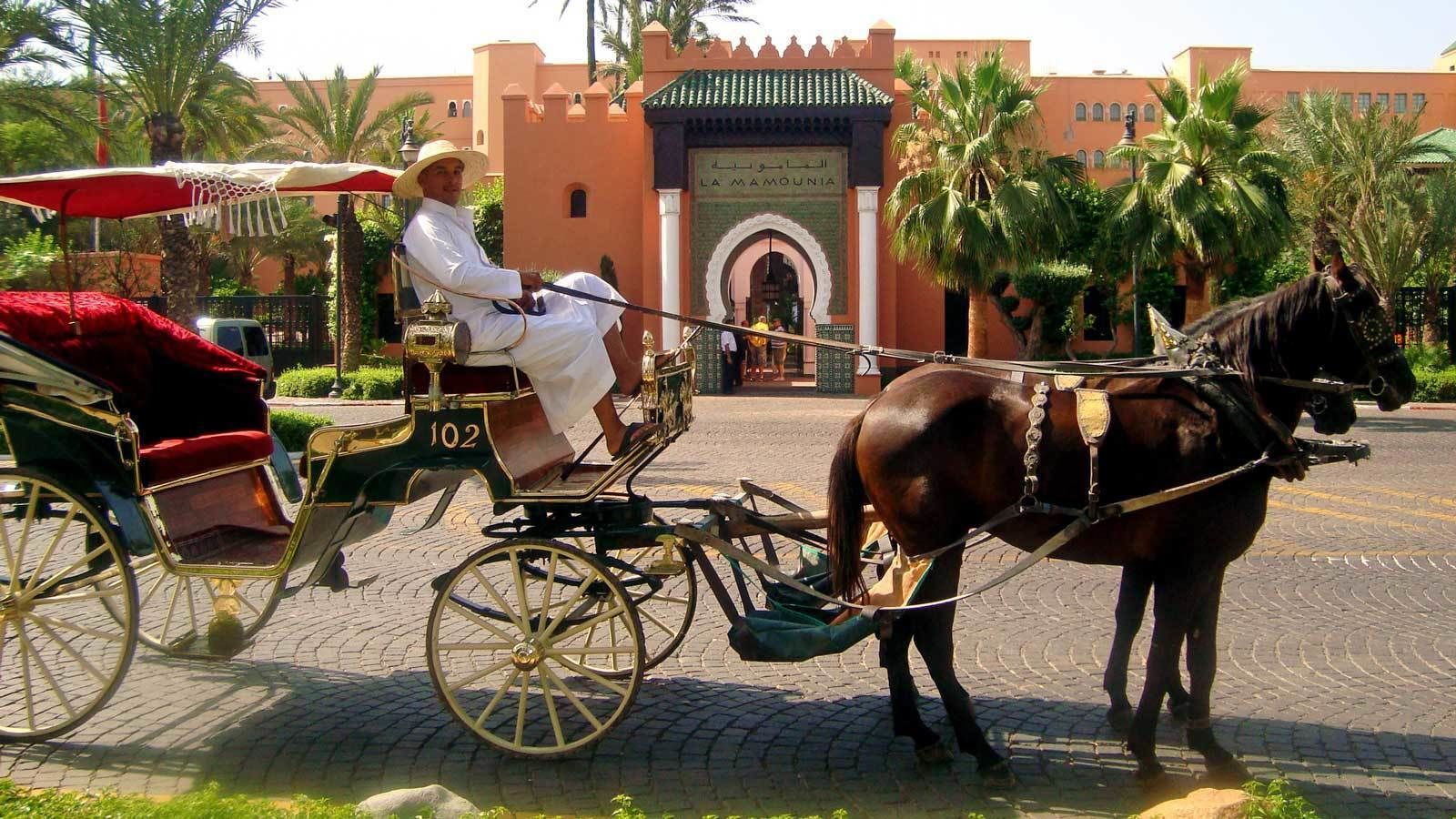 man driving a horse drawn carriage in Marrakech