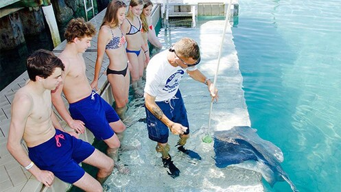 Group on the Stingray Encounter & Snorkel in the Grand Bahamas, Out Islands