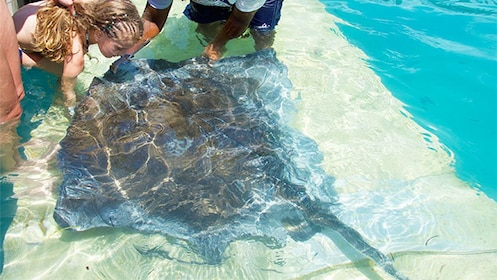 Stingray in the Grand Bahamas, Out Islands