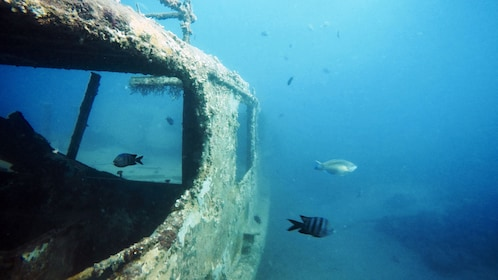 Sunken ship with fish