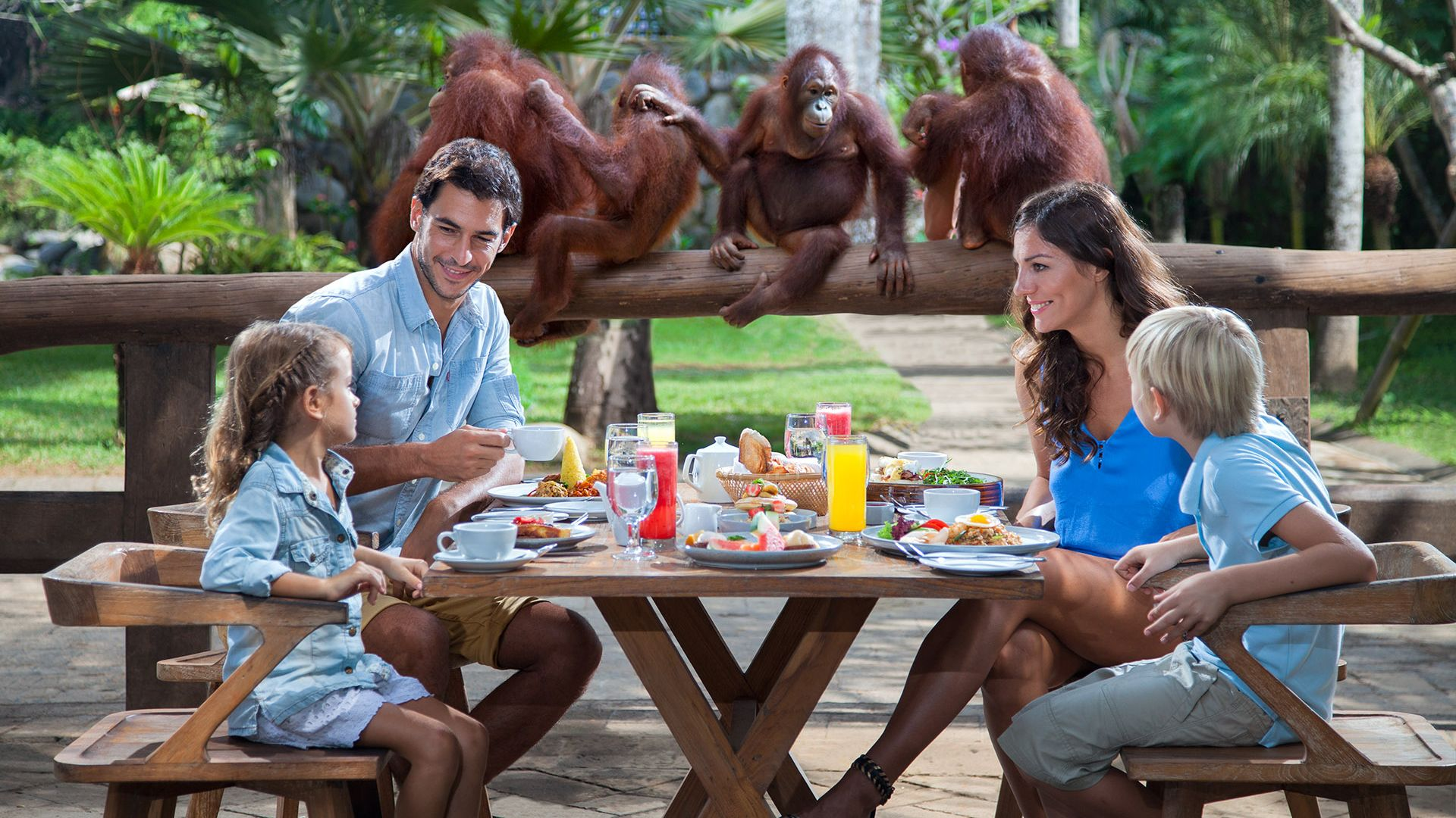 Breakfast with Orangutans at Bali Zoo