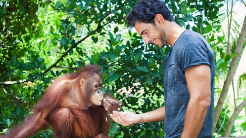 man feeding and orangutan