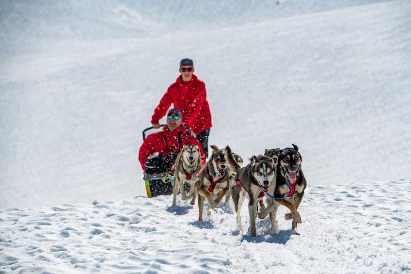 Helicopter Flight & Glacier Dog Sledding Tour