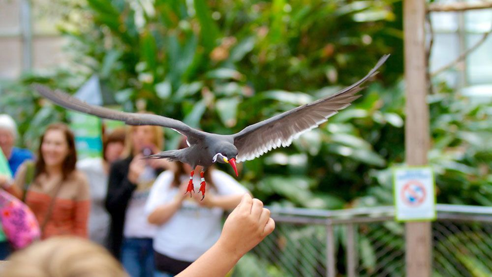 Child feeding a bird at National Aviary in Pittsburgh