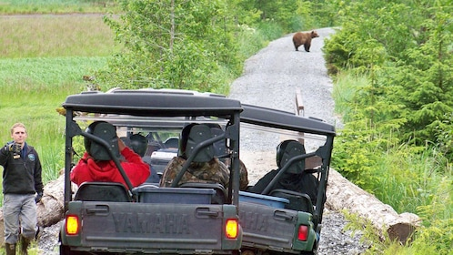 People in ATVs observing bear in the distance.