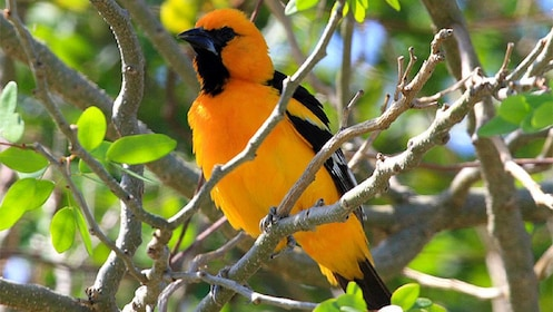 yellow bird in Cancun