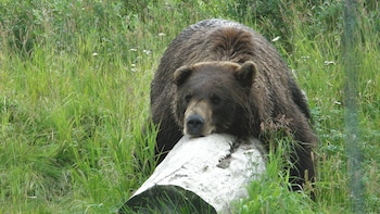 Alaska Wildlife Day Tour with Hotel Pick up