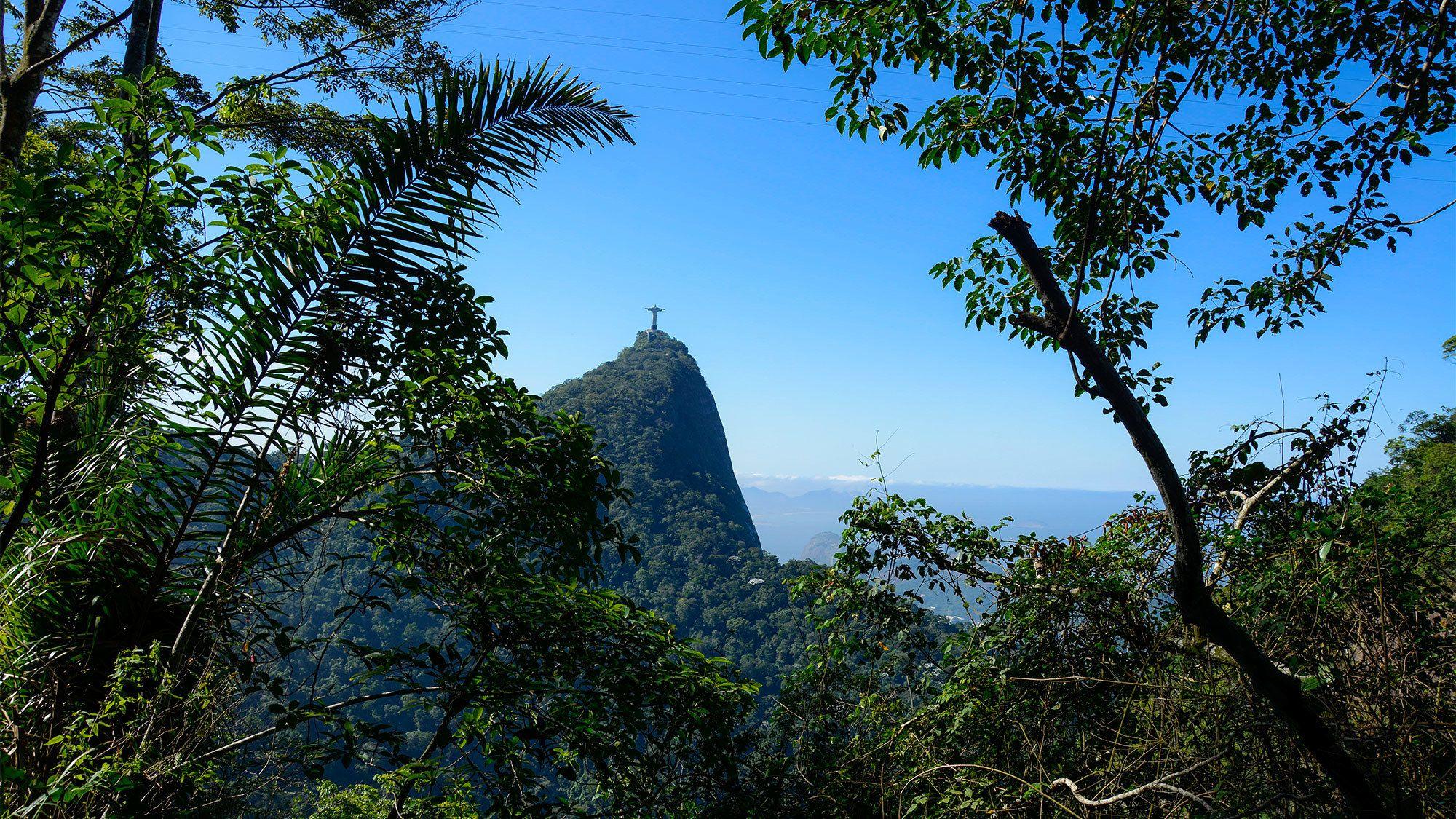 Tijuca Forest in Brazil