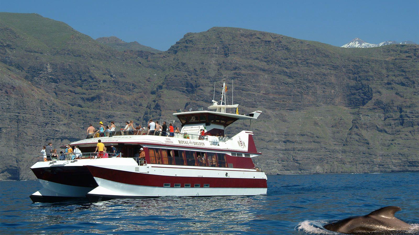 Visite guidée dédiée à l'observation des baleines et des dauphins avec vue ...